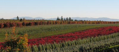 Willamette Valley agricultural fields